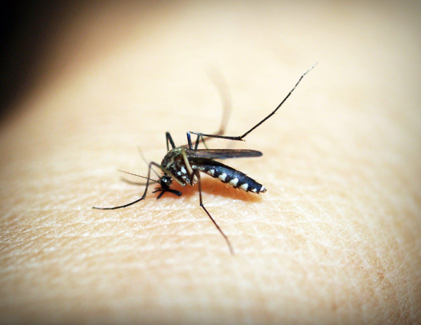 animal antenna biology bite