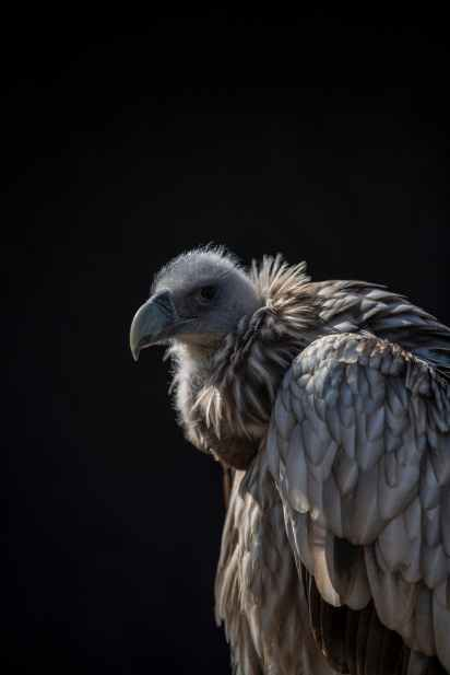 closeup photo of vulture