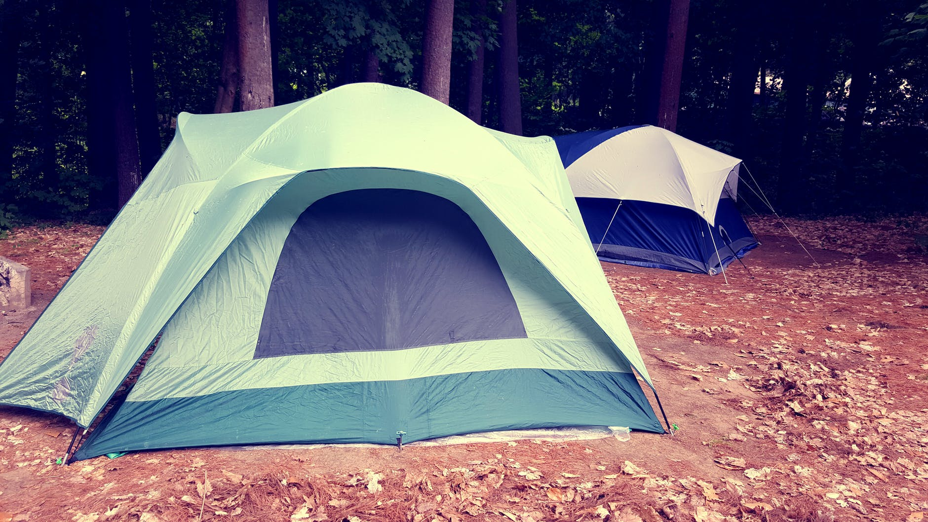 relaxation forest break camping