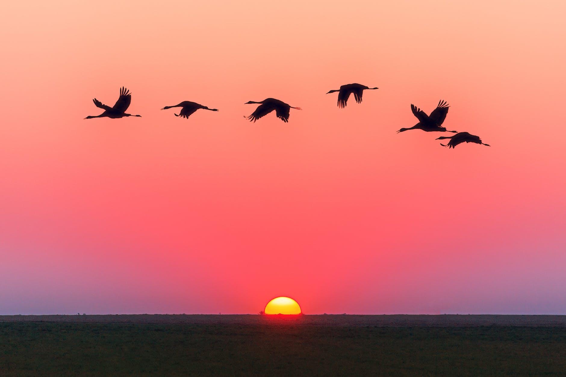 birds flying over body of water during golden hour