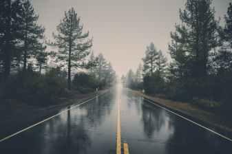 road landscape nature forest