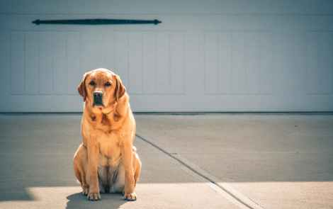 photo of brown labrador retriever sitting in front of driveway
