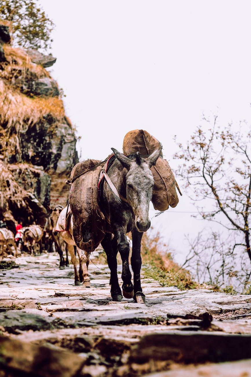 black donkey on a road
