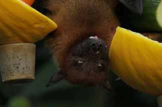 close up photo of bat