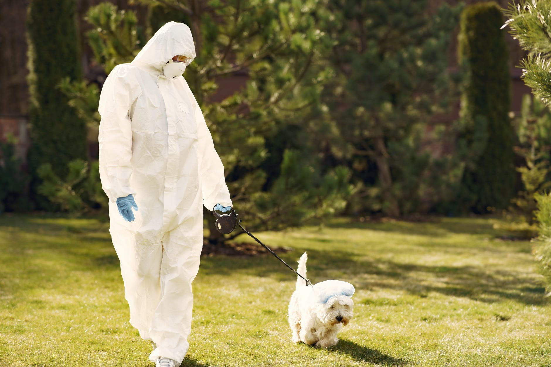 unrecognizable person in protective clothes walking little dog during coronavirus