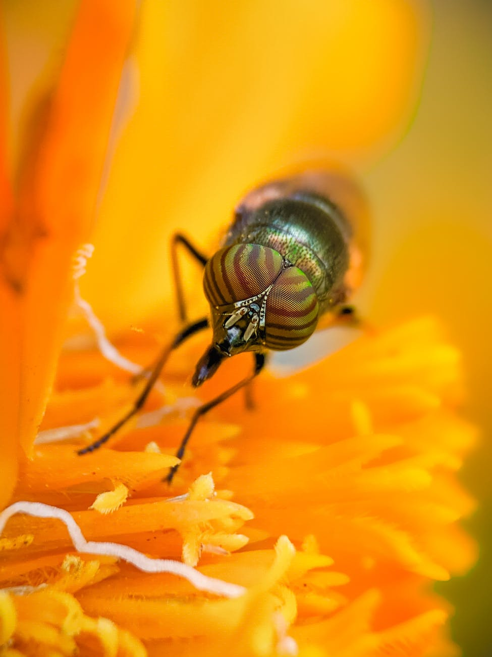 close up photography of a fly